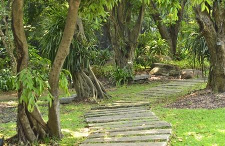 Pathway in a Peaceful Green Garden, big tree garden Stock Photo - 18283070