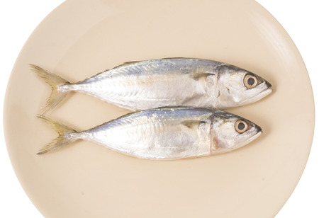 Mackerel fishes on plate photo