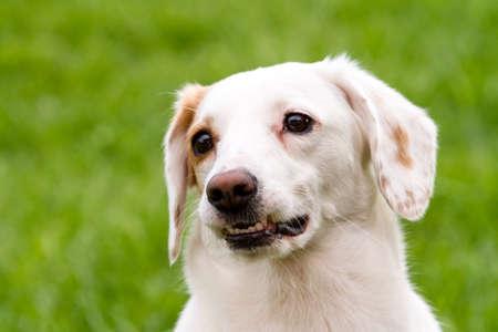 Portrait of white cute non-pedigree dog sitting on the green grass