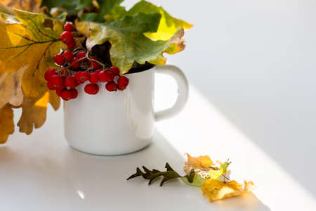 Autumn composition with bouquet of yellow autumn leaves and sprigs of mountain ash in the cup. Fall season concept, copy space