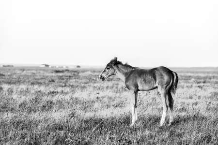 Little cute foal standing on the pasture, rural landscape.