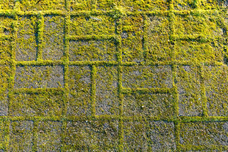 Stone footpath with moss, close up image Stock Photo