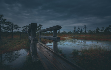 Swamp at gloomy weather in Latvia. Apocalyptic feeling hiking on a wooden trail through the bog with dark clouds. Swamp is surrounded with small lakes, junipers, plants and wildlife. Фото со стока