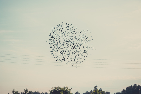 Birds migrating to south at the end of the summer. Pack of birds in the sky shaping in a circle with sky in background. Stock Photo