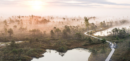 Panoramic colorful sunrise at swamp covered in fog. Sunshine through the thick mist with tree silhouettes in background at Kemeri national park in Latvia. Early morning delight. 스톡 콘텐츠