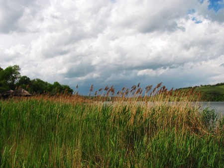 dry cane on the river in cloudy weather in the spring Stock Photo