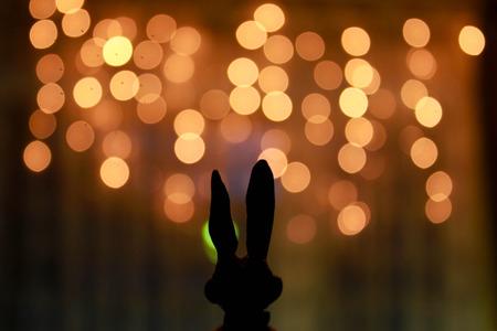romantic background: Hare ears Stock Photo