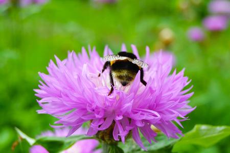 stamen wasp: bee on a flower