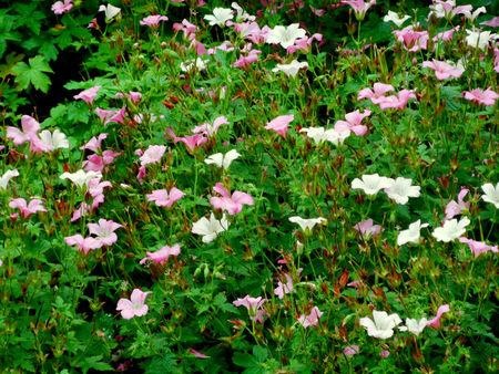esbjerg: Pink Flowers