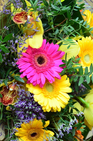 on occasion: orchids and gerbera for celebrating a special occasion