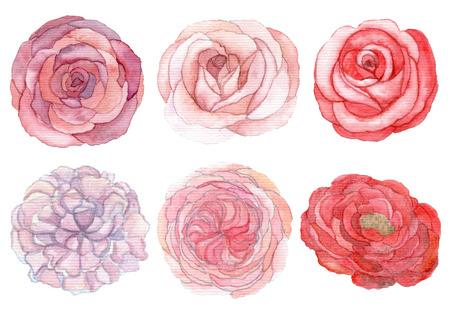 Set of roses and peonies traditional drawing and painting by water-colour on white background photo