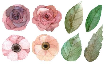 rosas amarillas: Conjunto de flores y hojas de dibujo y pintura tradicional con acuarelas sobre fondo blanco