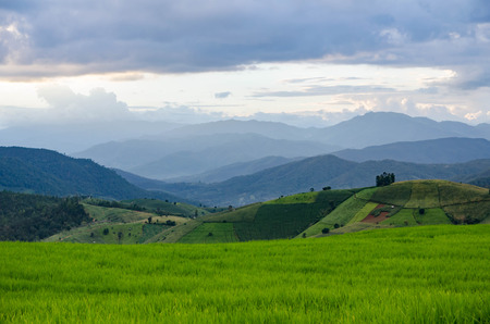 field sunset: Rice field, Rural mountain view with beautiful landscape green grass and blue sky Stock Photo