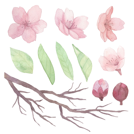 Set of flowers, leaves and branches traditional drawing and painting by water-colour on white background