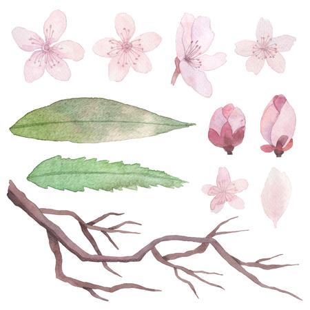 Nett Frühlingsblumen Die Blätter Färben Bilder - Ideen färben ...