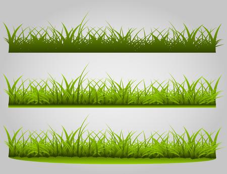 variety: variety of grass