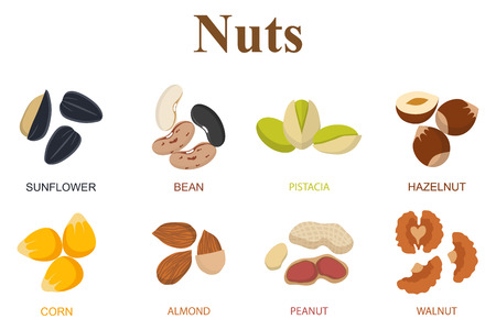 pine nuts: Set di otto diversi tipi di noci su uno sfondo bianco