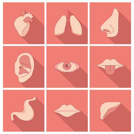 hear: Set of human organs in a  flat style Illustration