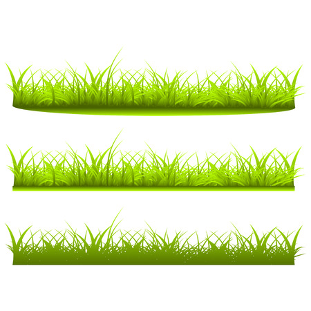 grass close up: Set a variety of grass on white  background Illustration