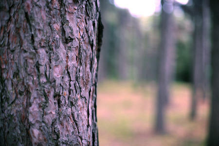 bark background: Wood bark on background forest stylish background