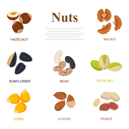 nut: Collection of different nuts flat style. Different nuts, walnuts, cashews, almonds on isolated  background