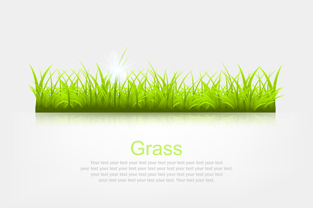 reflection of life: Summer background with grass a vector illustration Illustration