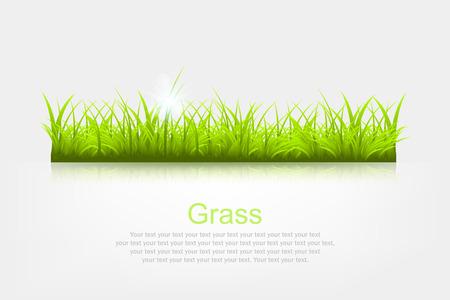 sedge: Summer background with grass a vector illustration Illustration