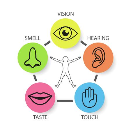 Set di icone di cinque sensi umani: vista, olfatto, udito, tatto, gusto Vettoriali