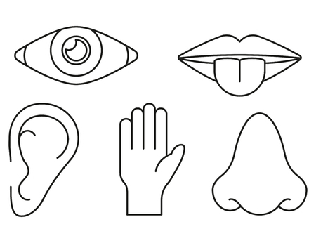 Sense organs in lines style on white background, vector
