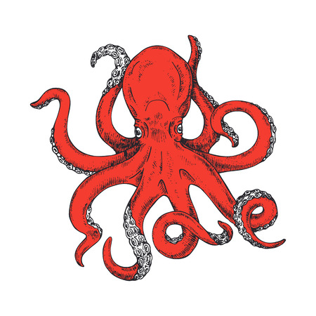 Octopus. Gigantic octopus vector ink sketch. Isolated on white background.