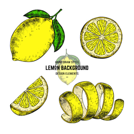 Hand drawn vector illustration lemon in engraving style.