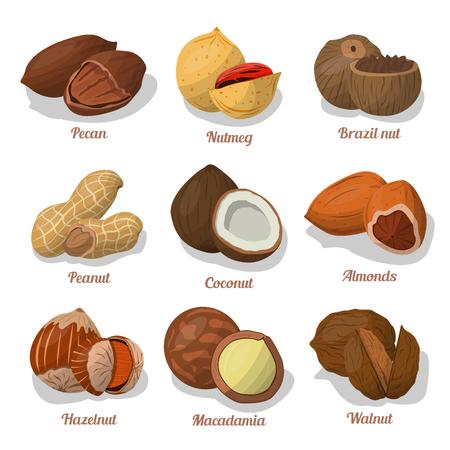 Nut food of cashew and Brazil, hazelnut and almonds, walnut, nutmeg and pecan, peanut and macadamia, coconut.