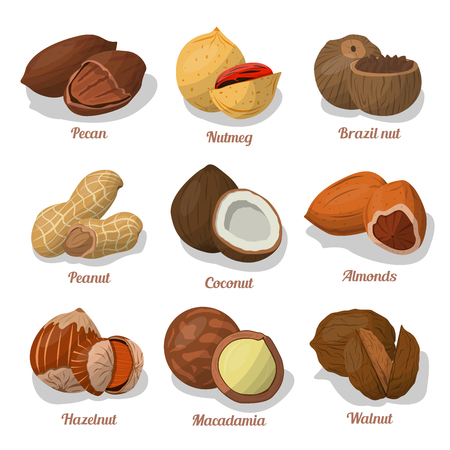 Nut food of cashew and Brazil, hazelnut and almonds, walnut, nutmeg and pecan, peanut and macadamia, coconut.