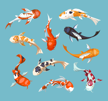 Carpas koi. Ilustración de vector de peces japoneses Koi. Ilustración de acuario.