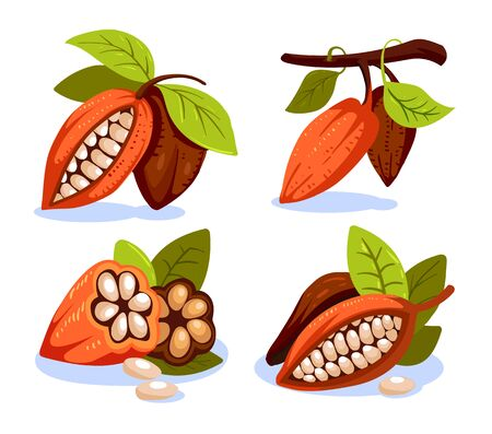 Composition of Cocoa, design template for emblems. Cacao plant. Vector illustration