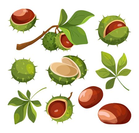 Chestnut vector isolated icons. Elements for label.