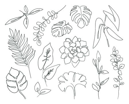 Abstract botanical set of line branches and leaves. Tropical exotic plants in continuous line style. Ilustracja