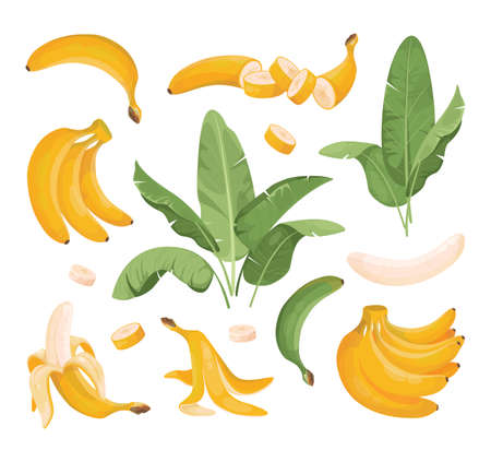 Exotic Bundle of banana fruits: bunches, palm tree leaves. Tropical fruits. Banana in a peel, sliced, peeled, in a bunch yellow fruits.