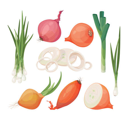 Bundle of vegetables different onions, slices, halves, pieces, green onion. Isolated graphic elements for packaging, menu. Ilustracja