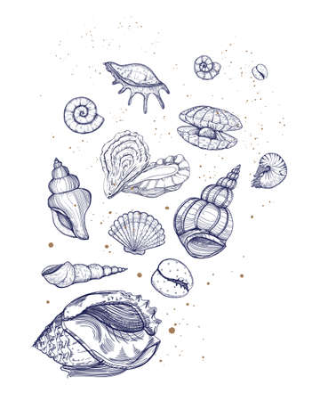 Seashells vector set. Natural design background. Sea design with various mollusk, sea shells different forms. Stock Illustratie