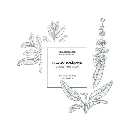 Hand drawn nature label leaves frame with salvia, sage plant. Minimalistic clean design