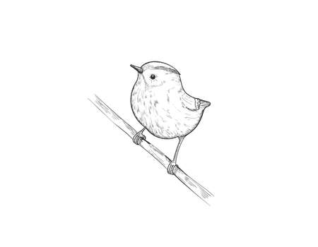 Cute spring bird on branch. Sparrow, robin, lark. Hand drawn forest bird isolated on white. Songbird linear engraved art.