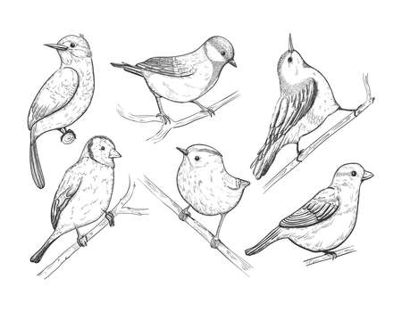 Cute spring birds on branch. Sparrow, robin, lark. Hand drawn forest bird isolated on white. Songbird linear engraved art.