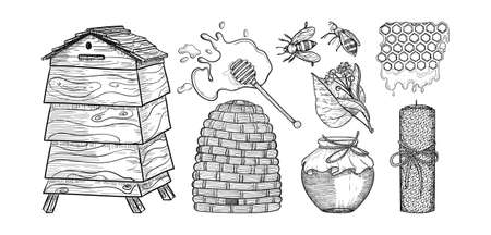 Honey icon  elements in sketch style. Engraved line art. Bees, wax honeycomb, bee house. Stock Illustratie