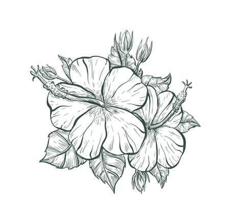 Vintage flower sign. Sketch Hibiscus flower, isolated illustration. Tropical Hibiscus flower, vector sketch print.