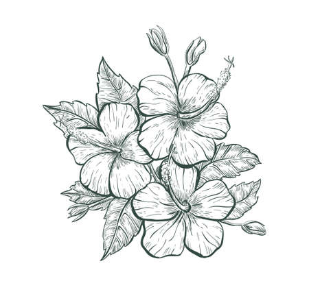 Sketch Hibiscus flower, isolated retro flower sign. Tropical Hibiscus flower Stock Illustratie