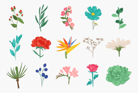 Collection of spring and summer flowers peony, chamomile, rose, sakura, magnolia, leaves, romantic floral elements. Иллюстрация