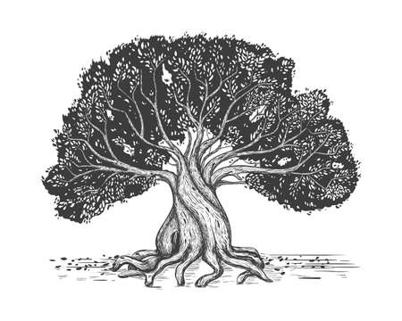 Family tree hand drawn sketch print. Genealogical tree. Stylized old olive tree.