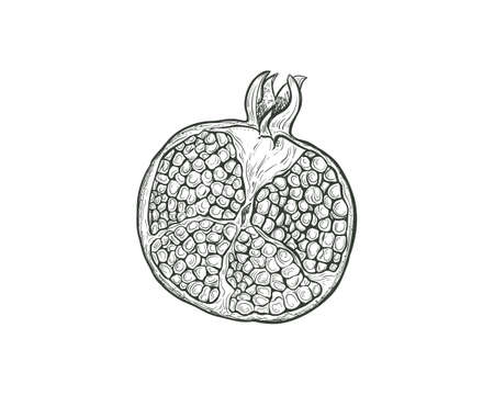 Sketch Pomegranate fruit cutaway, pomegranate seeds, isolated engraved sign. Garnet fruit vector sketch illustration. Иллюстрация