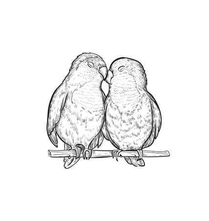 Sketch Lovebird parrots vector illustration. Lovebird parrot exotic bird engraving art design. Vector Illustratie